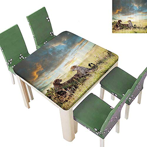 SpillProof Tablecloth Cheetahs Africa Nature Grass Dangerous Animals Hunters Rainy Weather for Picnic,Outdoor or Indoor 50 x 50 Inch