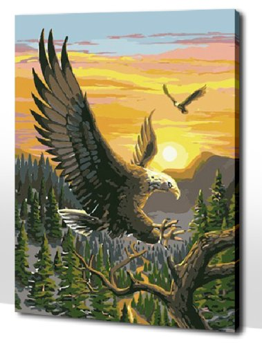 Diy oil painting, paint by number kit- Eagle 1620 inch. by Colour Talk
