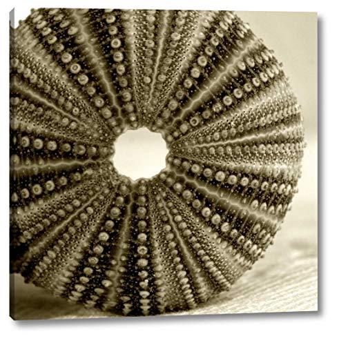 Sepia Shell Life 2 byAmber Light Gallery - 11