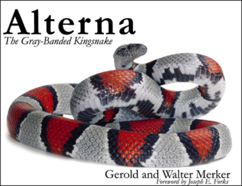 Alterna: The Gray-Banded Kingsnake