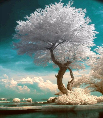 Tree Embroidery - 9