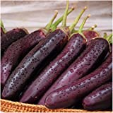 buy Package of 100 Seeds, Long Purple Eggplant (Solanum melongena) Non-GMO Seeds By Seed Needs) now, new 2018-2017 bestseller, review and Photo, best price $3.50