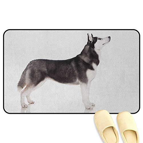 homecoco Alaskan Malamute Interior Doormat Alaskan Animal Arctic Canine Mammal Obedient Companion Portrait Purebred Black White Kitchen Decor mats W47 x L59 INCH