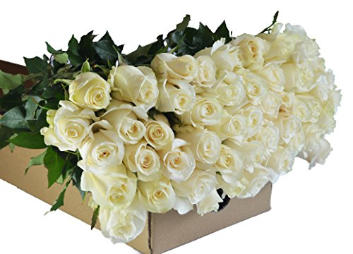 Farm2Door Wholesale Roses: 50 Fresh White Roses (Long Stemmed - 50cm) - Farm Direct Wholesale Fresh Flowers