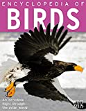 img - for Encyclopedia of Birds book / textbook / text book