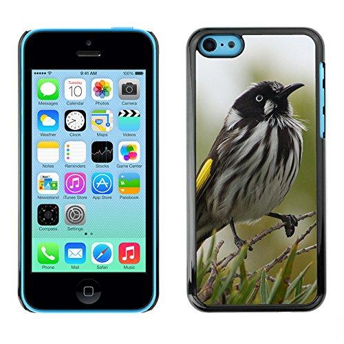 Premio Sottile Slim Cassa Custodia Case Cover Shell // F00014931 oiseau // Apple iPhone 5C