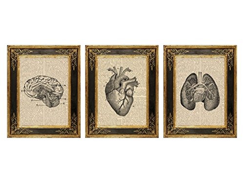 1 Art Print - Dreaemry Studio, Vintage Medical Illustration No. 1 Set of 3 Upcycled Antique Book Page Art Prints, 8x10.5 Unframed