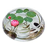 Gracefulvara 40pcs Lotus Flower Seeds Aquatic