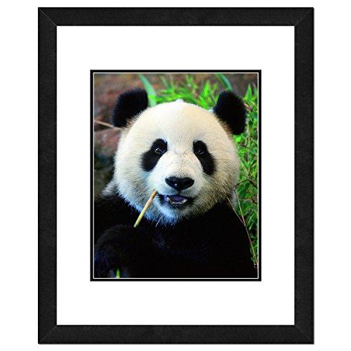 Panda Bear Photo - Panda Frame Picture
