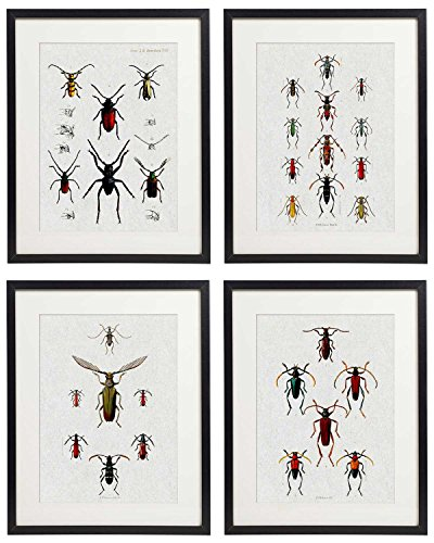 (IDIOPIX Vintage Insect Butterfly Moth Home Decor Wall Art Print Set of 4 Prints UNFRAMED No.3)