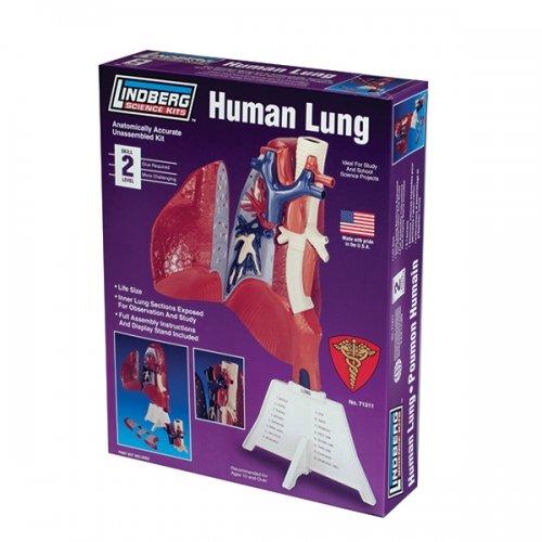 Lindberg Human Lung