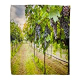 Emvency Throw Blanket Warm Cozy Print Flannel Green Napa Grape Harvest Purple Valley