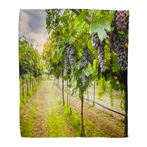 Emvency Throw Blanket Warm Cozy Print Flannel Green Napa Grape Harvest Purple Valley Vineyard Comfortable Soft for Bed Sofa and Couch 60x80 Inches ()