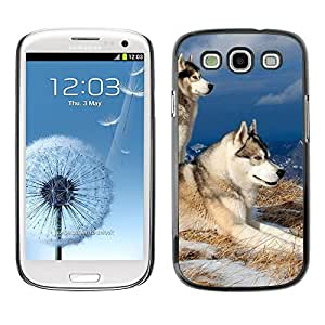 TopCaseStore / la caja del caucho duro de la cubierta de protección de la piel - Swedish Vallhund Elkhound Wolf Dog - Samsung Galaxy S3 I9300