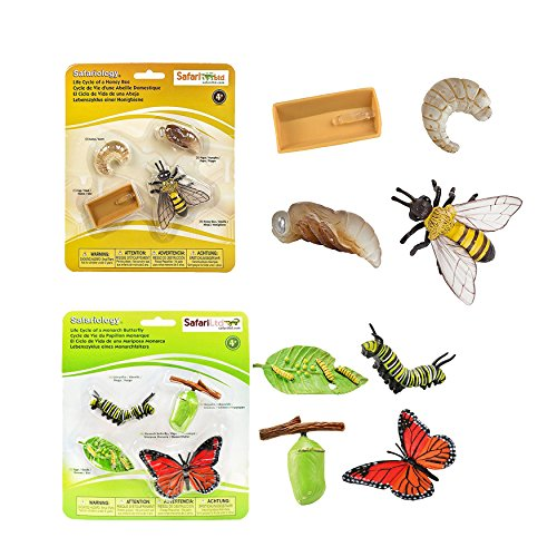 Safari Ltd Safariology the Life Cycle of a Honey Bee and Safari Ltd Life Cycle of a Monarch Butterfly bundled by Maven Gifts