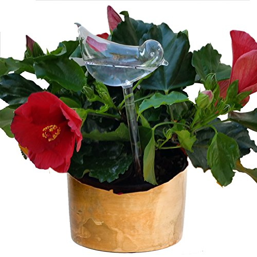 EarthMod: Vacation Or Not, House Plant Self Watering With Best Hand Blown Glass Bird Waterer System Is Easy As Aqua Globes. Automatic Globe Irrigation For Patio, Lawn, Garden Pot Or Planter.
