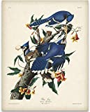 Best Home-X Bird Houses - Blue Jays - 11x14 Unframed Art Print Review