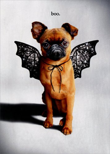 Trick Or Treat Dog With Bat Wings - Avanti Funny Halloween Card]()
