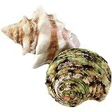 LLサイズ貝殻セット (貝殻2個入)