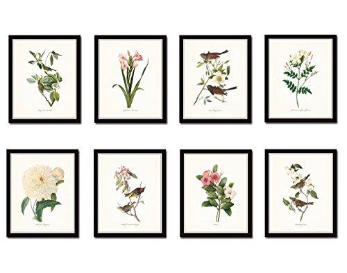 Wallpaper Cottage Prints - Audubon Birds and Redoute Botanicals Print Set No. 2 Set of 8 Giclee Prints - Unframed