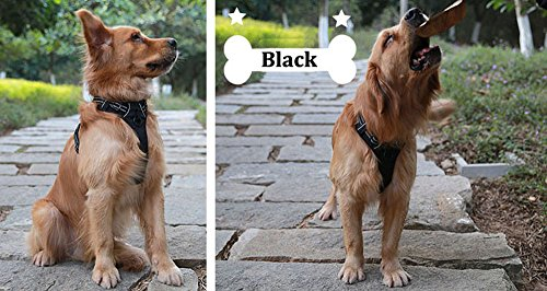 Buy non pulling dog harness