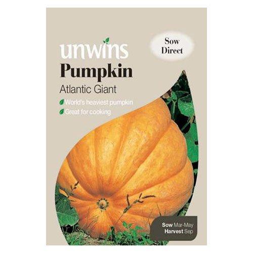 Unwins Pumpkin Atlantic Giant Seeds Westland