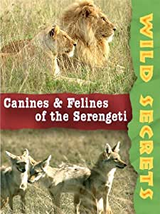 Wild Secrets: Canines And Felines Of The Serengeti