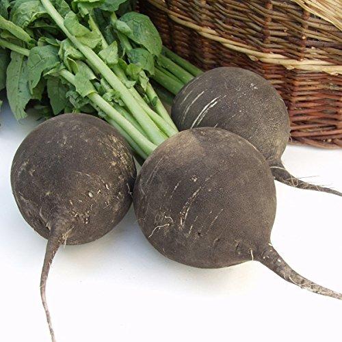 Radish - Black Spanish Round - 750 Seeds (Black And Spanish)
