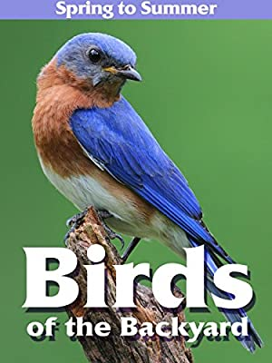 Birds of the Backyard: Spring in to Summer