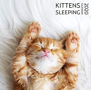 Amazon.com: Calendario de pared de gato 2019   Calendario de ...