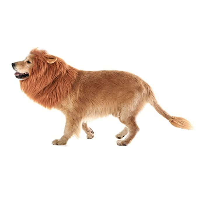 DREAMOWL Dremowl - Peluca de León para Perro o Mascota, Ideal como Regalo de Navidad: Amazon.es: Productos para mascotas