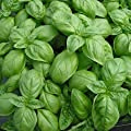 Herb Seeds - Italian Large Leaf Basil - The Better Pesto Basil - Heirloom - Liliana's Garden