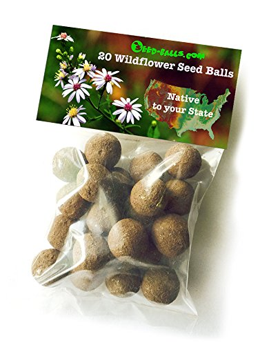 US Wildflower Seed Balls- Native to your state, 20 Bulk Seed Bombs (Florida)