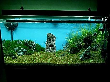 Nicepets - Adorno para decoración de acuario, pecera y terrario de resina con forma de planta en tronco de árbol con cara grabada: Amazon.es: Productos para ...