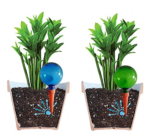 Plantpal Pack of 2 Large BLUE & GREEN Watering Globes, Plant Watering Stakes, Automatic Indoor Potted Plant Watering, Vacation Watering System. Use in 7 - 10 Inch Indoor Plant Pots. by Plantpal