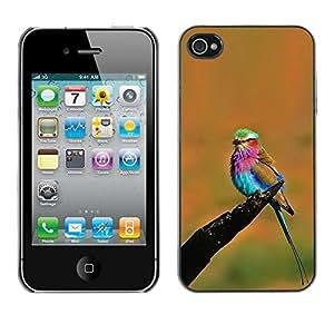 Naranja vibrante colorido pájaro del verano- Metal de aluminio y de plástico duro Caja del teléfono - Negro - iPhone 4 / 4S