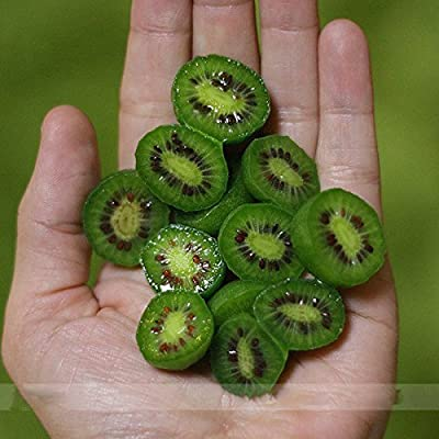 (Kiwiberry *Ambizu*) Heirloom Cocktail Miniature Kiwi Kiwiberry Berry Hardy Actinidia Arguta Fruit Seeds, Professional Pack, 30 Seeds
