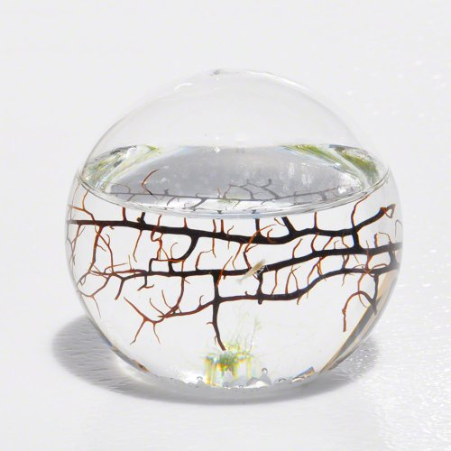 EcoSphere-Closed-Aquatic-Ecosystem-Small-Sphere