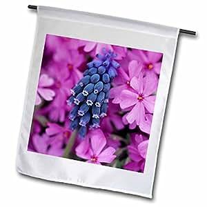 Danita Delimont - Flowers - Grape Hyacinth in Phlox in flower garden - NA01 BJA0016 - Jaynes Gallery - 18 x 27 inch Garden Flag (fl_83302_2)