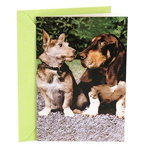 Hallmark Shoebox Funny Love Greeting Card (Two -