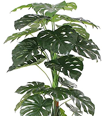AMERIQUE Gorgeous & Unique 5.7 Feet Monstera Palm Artificial Plant Silk Tree, Real Touch Technology, with UV Protection, Super Quality', Green