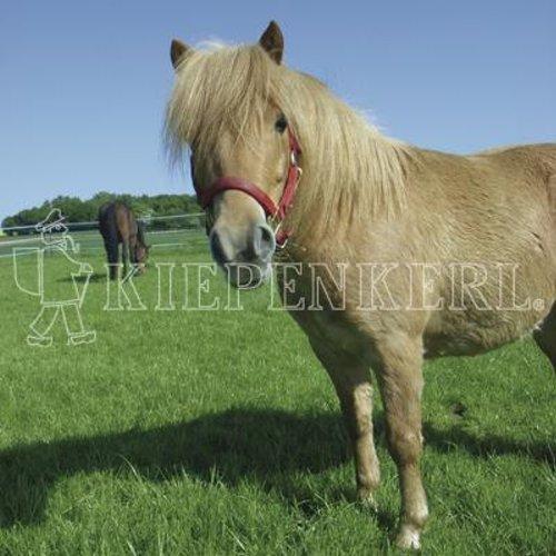 Kiepenkerl Country Horse Öko 2217 Pferdeweide | 10 kg Rasensaat