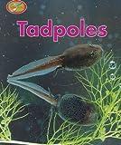 Tadpoles, Theresa Greenaway, 0739821954