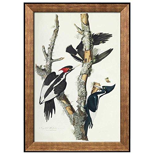 Beautiful Illustration Inside of an Elegant Frame of an Ivory Billed Woodpecker by John James Audubon Framed Art