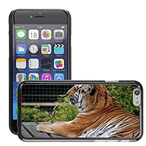 Hot Style Cell Phone PC Hard Case Cover // M00113087 Tiger Big Cat Feline Close-Up // Apple iPhone 6 4.7""
