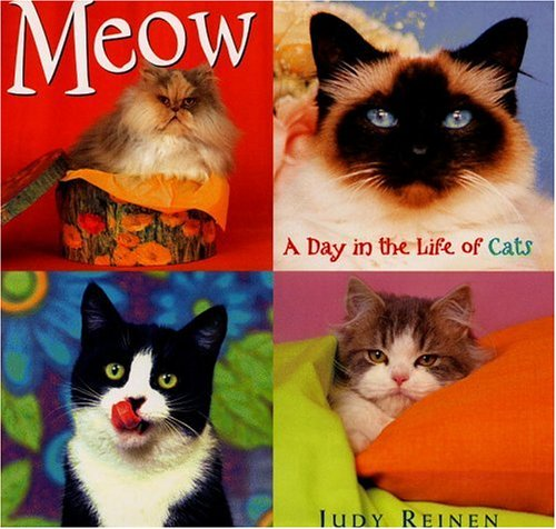 Meow:  A Day in the Life of Cats