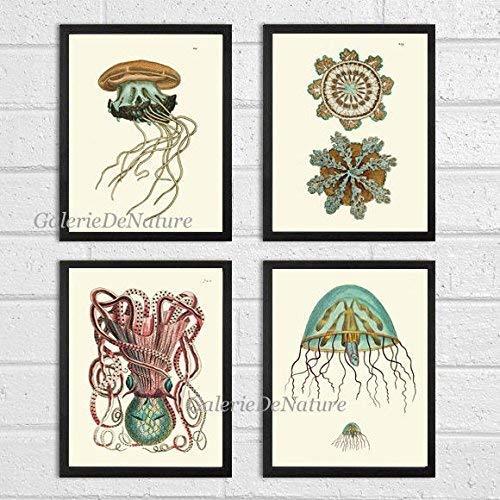 (Bathroom Wall Art Jellyfish Coral Octopus Squid Sea Marine Nature Print Set of 4 Art Prints Beautiful Antique Fish Aqua Bathroom Bedroom Beach Home Room Wall Decor Unframed NOD)