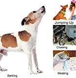 Obey Max-Pro Humane Pet Training Tool - New