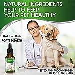 Natural ANTIBIOTICS for Dogs / ANTIBIOTICS Alternative for Pets/ Kennel Cough Medicine for Dogs / UTI Treatment / ANTIBIOTICS for Cats 15