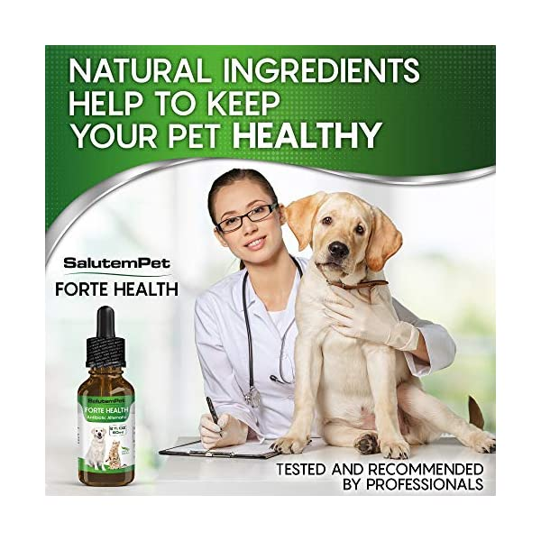 Natural ANTIBIOTICS for Dogs / ANTIBIOTICS Alternative for Pets/ Kennel Cough Medicine for Dogs / UTI Treatment / ANTIBIOTICS for Cats 7